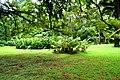 Botanic garden limbe135.jpg