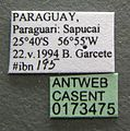 Brachymyrmex cordemoyi casent0173475 label 1.jpg