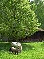 Bretten Koppel mit grasenden Pferden.JPG