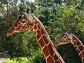 Brevard Zoo, Viera FL - Flickr - Rusty Clark (56).jpg