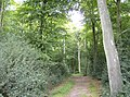 Bridleway in New Copse - geograph.org.uk - 593591.jpg