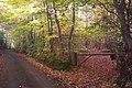 Bridleway in Perry Wood towards Conduit Wood - geograph.org.uk - 1558358.jpg