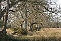 Broadhembury, Colliton Moor - geograph.org.uk - 133314.jpg