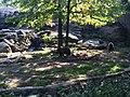 Bronx Zoo - NY - USA - panoramio (11).jpg