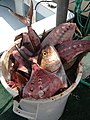 Bucket of Fish Remains Eye of Death.jpg