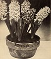 Bulbs and seeds for fall 1937 (1937) (20426280241).jpg