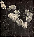Bulbs and seeds for fall planting 1933 (1933) (19799091013).jpg
