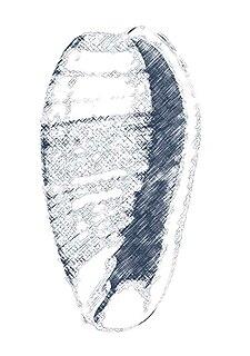 <i>Bullata</i> genus of molluscs