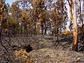 Burned forest 1.JPG