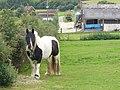 By Cattle Manger - geograph.org.uk - 928413.jpg