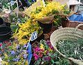 Céret - Mimosa et fleurs sur le marché.jpg