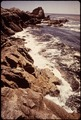 CALIFORNIA-POINT LOBOS RESERVE - NARA - 543295.tif