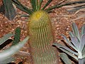 Cactus23.jpg