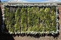Capel-Manor-College-Gardens-Vertical-wall-garden.jpg