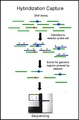 Capp-seq capture of DNA.pdf