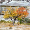 Cappadocia, Zelve Pasabagi Valley - panoramio (4).jpg