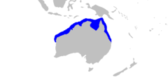 Carcharhinus fitzroyensis distmap.png