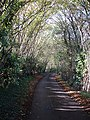 Caring Road - geograph.org.uk - 80388.jpg