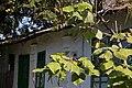 Casa Toader Rosca, Barcanesti 05.jpg