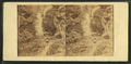 Cascade in Crawford Ravine, from Robert N. Dennis collection of stereoscopic views.png