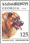 Caucasian-Sheepdog-Canis-lupus-familiaris (1).jpg