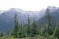 Cedrus deodara Picea smithiana Solang.jpg