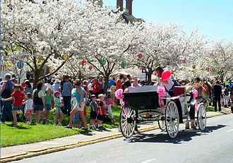 "Hanami - ""International Cherry Blossom Festival"" in Macon, Georgia"