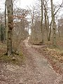 Chiltern Way in beeches of Bloom Wood - geograph.org.uk - 719474.jpg