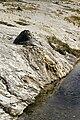 Chimney Cone UGB YNP1.jpg