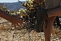 Cholla cactus on shoe soles (36692535940).jpg