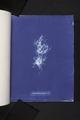 Chondrus crispus var (NYPL b11861683-419683).tiff