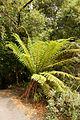 Christchurch Botanic Gardens, New Zealand section, detail, 2016-02-04.jpg