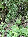 Ciężkowice park dworski, 2 poł. XIX fragment ogrodzenia nr 613934 (1).JPG