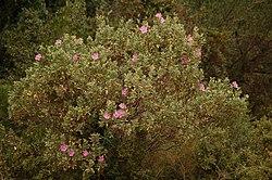 bosque mediterr neo wikipedia la enciclopedia libre