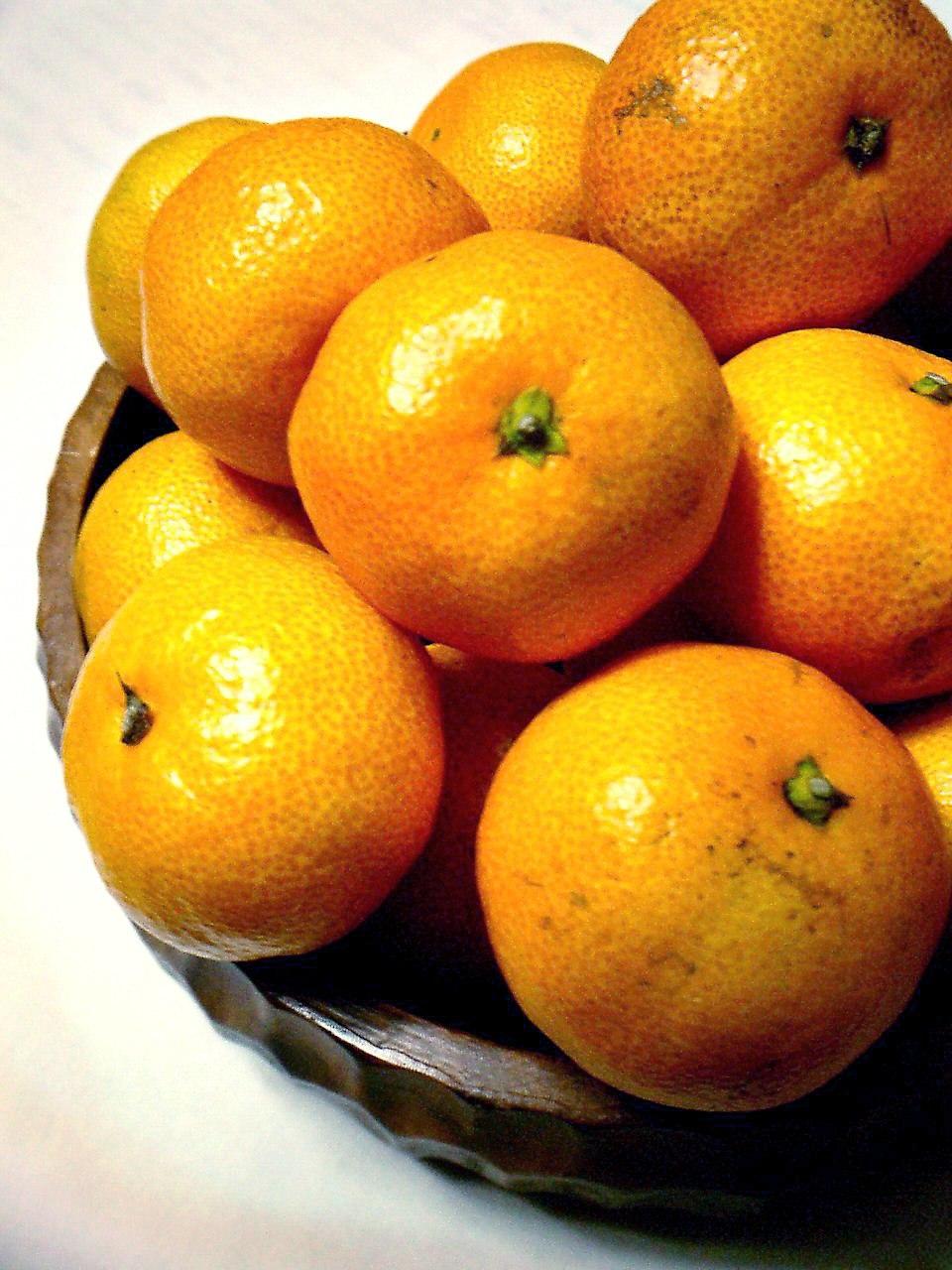 Citrus unshiu-unshu mikan-2
