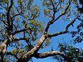 Cocoa Beach at Lori Wilson Park - Flickr - Rusty Clark (39).jpg
