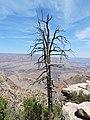 Coconino County, AZ, USA - panoramio (67).jpg