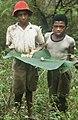 Collectie Nationaal Museum van Wereldculturen TM-20029479 Twee jongens met cashew-vruchten op een blad Sint Eustatius Boy Lawson (Fotograaf).jpg