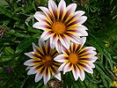 Colourful flowers.JPG