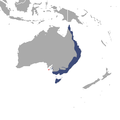 Common Ringtail Possum area.png