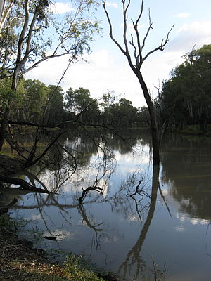Condamine River - The Condamine River near Chinchilla in 2012