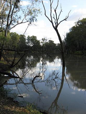 Condamine River - The Condamine River near Chinchilla in 2012