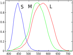Cone cell - Normalized responsivity spectra of human cone cells, S, M, and L types