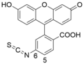 Correct - Fluorescein 6-isothiocyanate.png