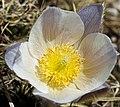 Corvara - flower.jpg