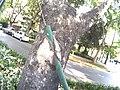 Crecimiento de un árbol.JPG