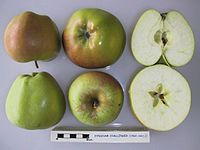 Cross section of Eynsham Challenger, National Fruit Collection (acc. 1960-042).jpg