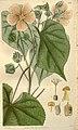 Curtis's botanical magazine (Plate 2759) (8611155984).jpg
