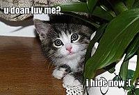 Cute kitteh.jpg