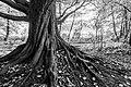 Dülmen, Börnste, Teiche in der Heubachniederung, Baum -- 2020 -- 3510-4 (bw).jpg